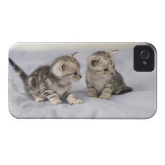 Americano Shorthair 7 Capa Para iPhone 4 Case-Mate