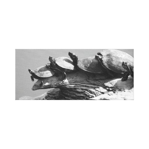 Amigos da tartaruga na lona envolvida impressão de canvas envolvida
