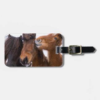 Amigos islandêses do cavalo, Islândia Etiqueta De Bagagem