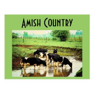 Amish acobarda o cartão