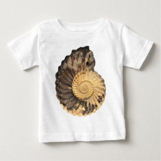 Amonite woollgari-Cretácea de Collignoniceras Camisetas
