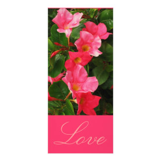 Amor 10.16 X 22.86cm Panfleto