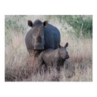 Amor de mãe - cartão do estilo do rinoceronte
