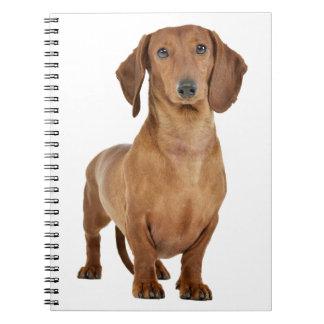 Amor do cão de filhote de cachorro do Dachshund Cadernos