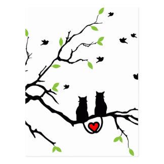 Amor do gato cartão postal