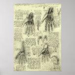 Anatomia da mão humana por Leonardo da Vinci Impressão