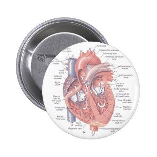 Anatomia do coração bóton redondo 5.08cm