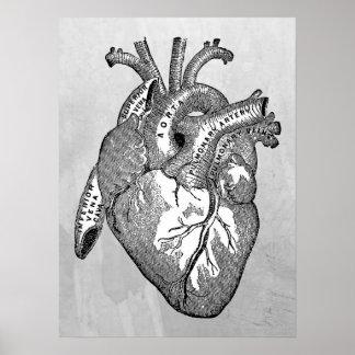 anatomia do coração do vintage pôster