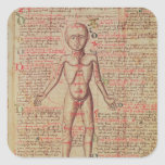 Anatomia do corpo humano adesivo