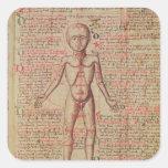 Anatomia do corpo humano adesivo em forma quadrada