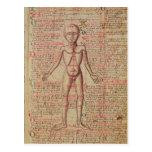 Anatomia do corpo humano cartao postal