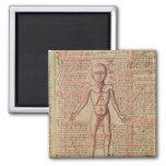 Anatomia do corpo humano ímã quadrado