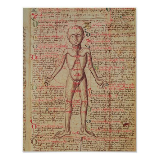 Anatomia do corpo humano pôster
