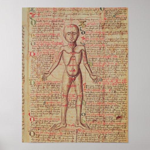 Anatomia do corpo humano posters
