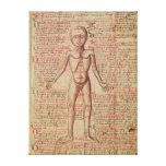 Anatomia do corpo humano impressão de canvas envolvidas