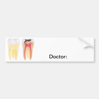 Anatomia dos dentes adesivo para carro
