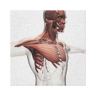 Anatomia dos músculos masculinos na parte superior impressão em canvas