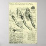 Anatomia Leonardo da Vinci dos músculos do braço e Pôsteres