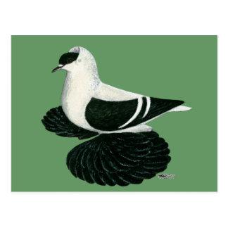 Andorinha:  Bar branco preto saxão Cartão Postal