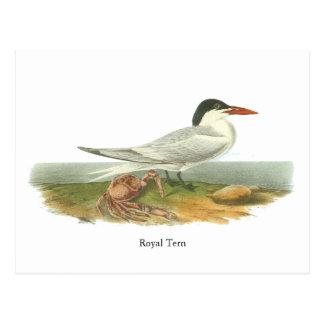 Andorinha-do-mar real, John Audubon Cartão Postal