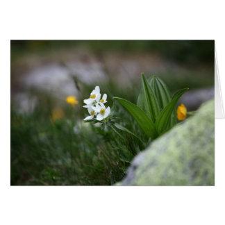 anêmona Narciso-florescida (narcissiflora da Cartão Comemorativo