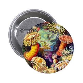 Anêmonas de mar do vintage, Ernst Haeckel Bóton Redondo 5.08cm