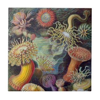 Anêmonas de mar subaquáticas do vintage por Ernst