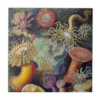 Anêmonas de mar subaquáticas do vintage por Ernst Azulejo Quadrado Pequeno