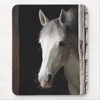 Animais cinzentos Mousepad do cavalo da égua