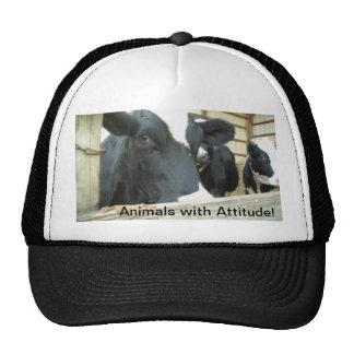 Animais com atitude! boné