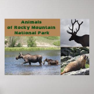 Animais do parque nacional de montanha rochosa poster