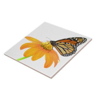 Animais selvagens da flor do girassol da borboleta