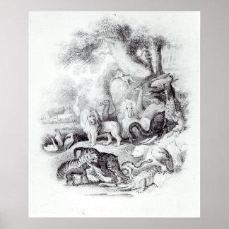 Animais selvagens 'de uma história da terra posteres