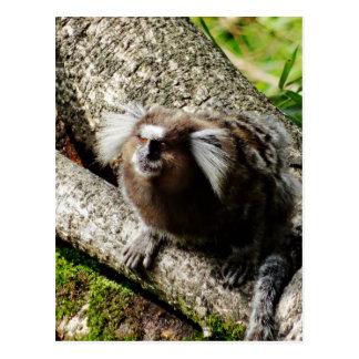 Animais selvagens em Rio Cartão Postal