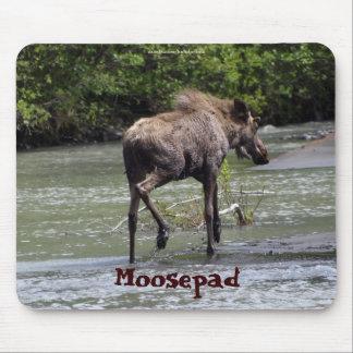Animais selvagens engraçados Mousepad dos alces ca
