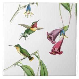 Animais selvagens florais dos animais das flores