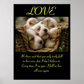 Animal 5 dos posters do AMOR