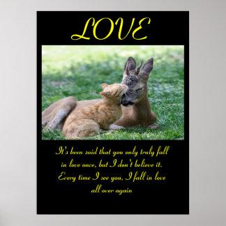 Animal 7 dos posters do AMOR