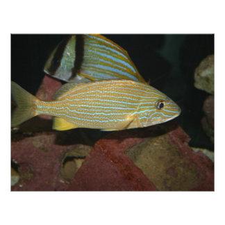 animal amarelo listrado azul da água salgada dos p