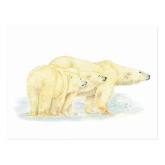 Animal original da família do urso polar da cartão postal