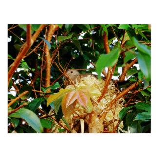 Aninhamento - pássaros de Brasil Cartão Postal