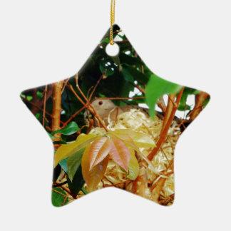 Aninhamento - pássaros de Brasil Ornamento De Cerâmica Estrela