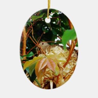Aninhamento - pássaros de Brasil Ornamento De Cerâmica Oval