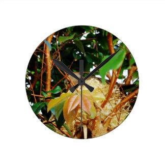 Aninhamento - pássaros de Brasil Relógios De Pendurar