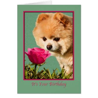 Aniversário, cão de Pomeranian e cartão