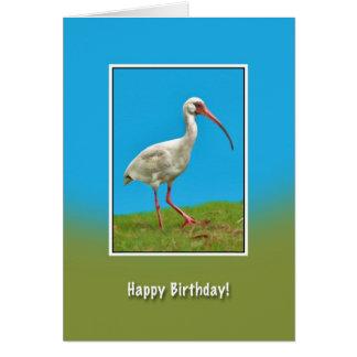 Aniversário, cartão branco do pássaro dos íbis