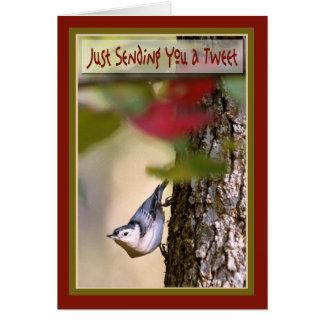 Aniversário - cartão do pica-pau-cinzento