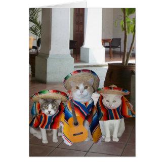 Aniversário espanhol dos gatos engraçados para cartão comemorativo