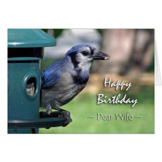 Aniversário para a esposa, Jay azul no alimentador Cartoes