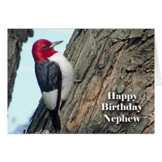 Aniversário para o sobrinho, pica-pau cartão comemorativo